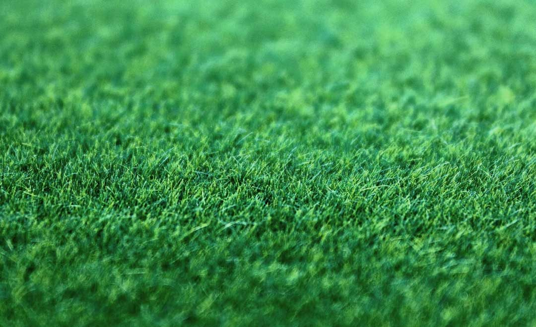 The Do's and Don'ts of Fescue